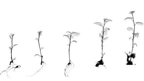 stages of a plant growth